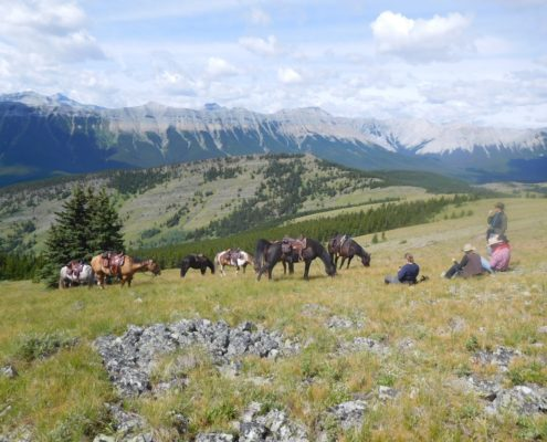 Moose Mountain Horseback Adventures